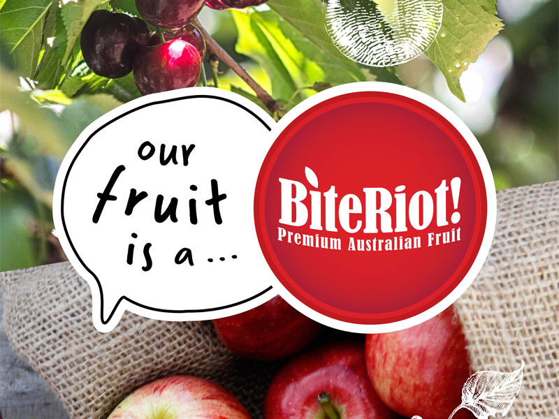 Bite Riot Logo and design for Pullup Banners